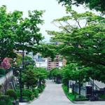 函館市大三坂を散策すると楽しめるホワイトロードな景色の美しさ